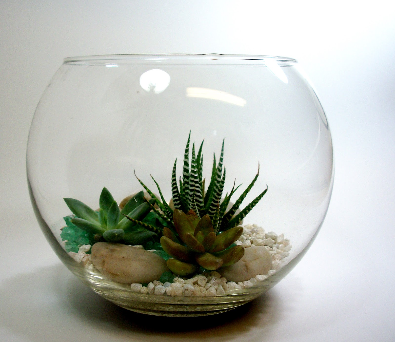The Dachshund In The Desert New Terrariums And Planters