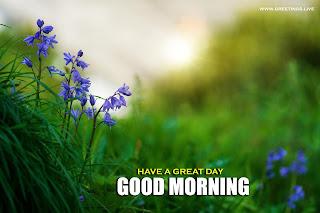 good morning glower greetings