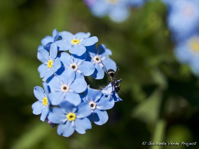 Flower Trail, Monte Pilatus, Lucerna, por El Guisante Verde Project