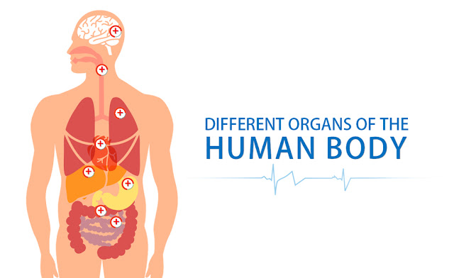 http://www.creativtechnologies.com/BlogPost/BodyAnatomy/story.html