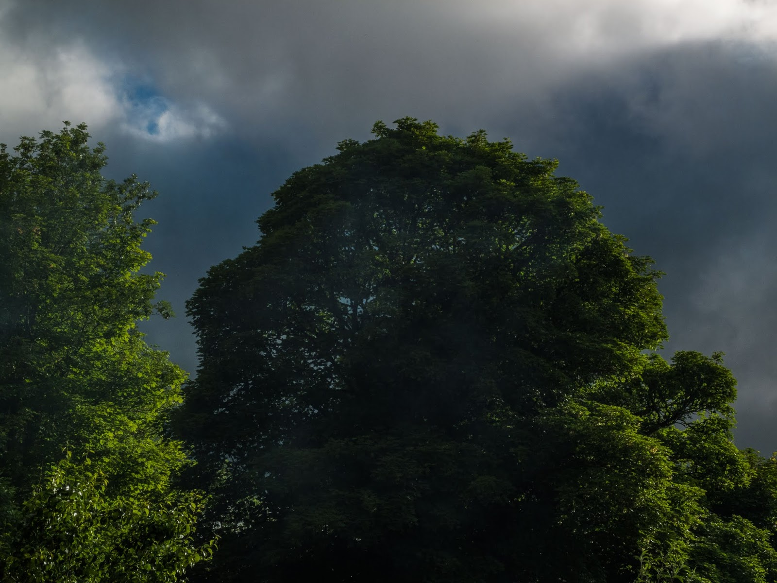 Sun shining on mature maple trees with dark clouds in the sky.