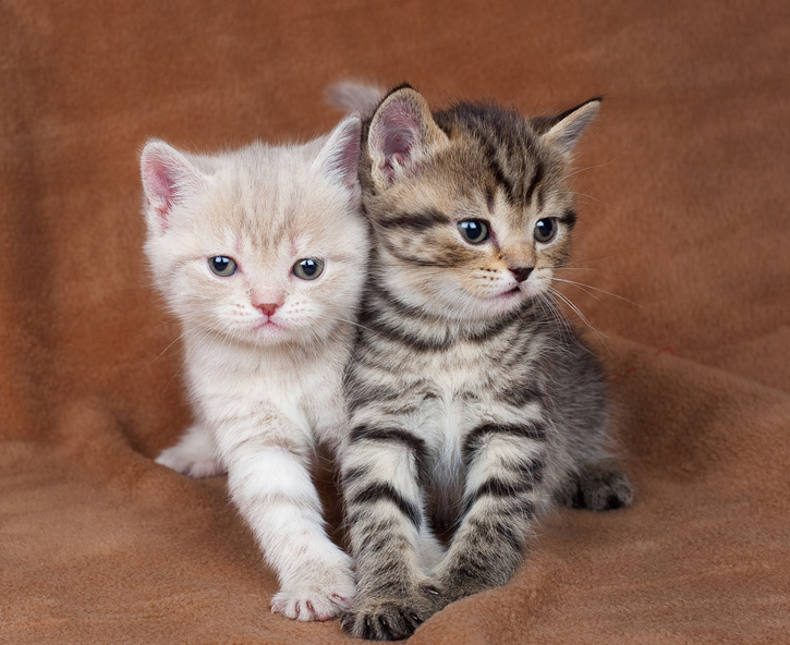 Two very cute kittens next to each other on a settee