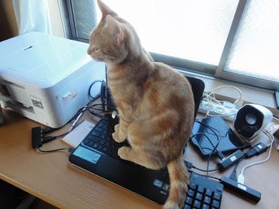 パソコンの上に猫が座っています。