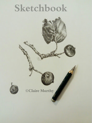british botanical art apples