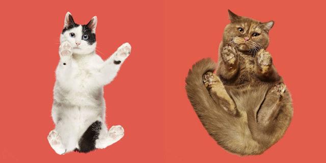 Underlook Project - Berhasil Mengubah Hal Konyol Menjadi Sebuah Karya Terbaik ( Under-Cats )