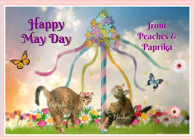 Image result for happy may day cat image