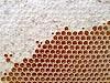Ασφράγιστα μέλια εκτός κυψέλης: Ξινίζουν; Πως πρέπει να τα αποθηκεύσω; Πρέπει να σφίξω τα μελίσσια;