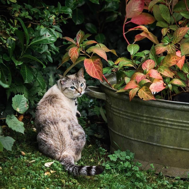 Gato en el jardín y cubo de zinc