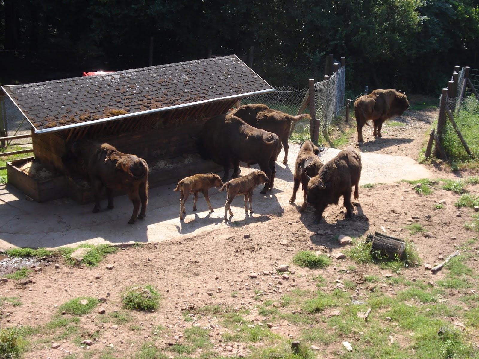 Kaiserslautern Pfalz Bilder Und Anderes Im Wildpark