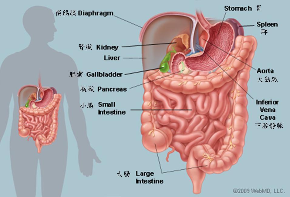 腹腦資料彙集 腹腦的成員及功能評估