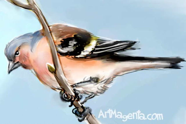 Chaffinch is a bird painting by ArtMagenta.com
