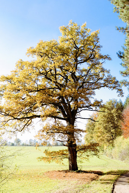12tel Blick, Pomponetti, Herbstimpressionen