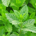 7 Amazing Ways Pudina (Mint) Can Improve Your Health