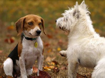 Dog interacting