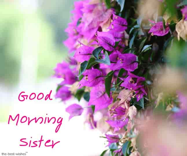 good morning elder sister