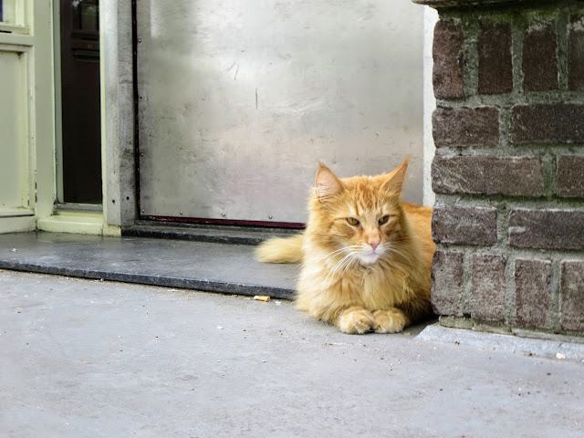 Discover Amsterdam: cat outside the Poezenboot