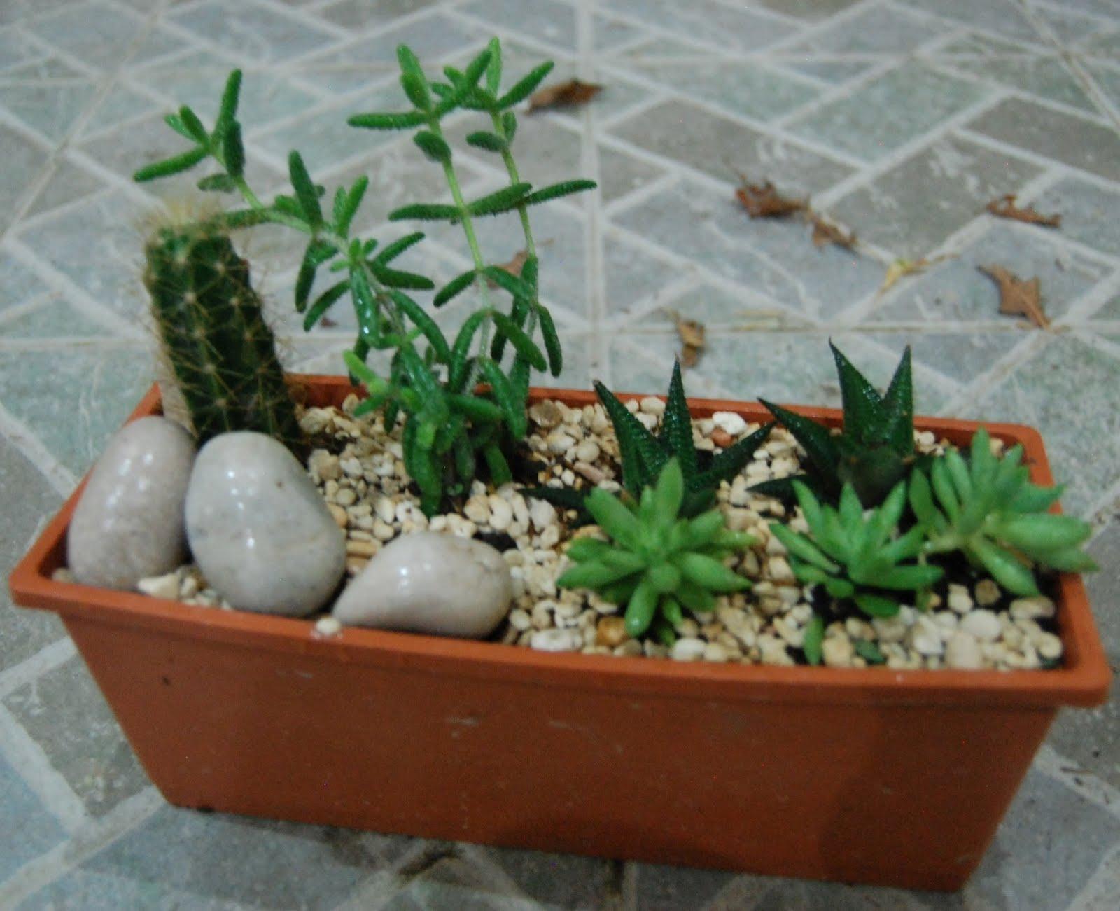 Planting Cactus Dish Garden Garden Ftempo