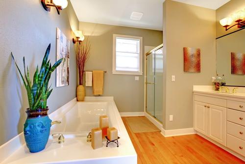 Wybierz rośliny idealne do każdej łazienki, nawet ciemnej