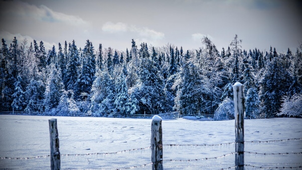 Desktop HD Wallpaper Winter Snow Fence Snowdrifts Cover Trees