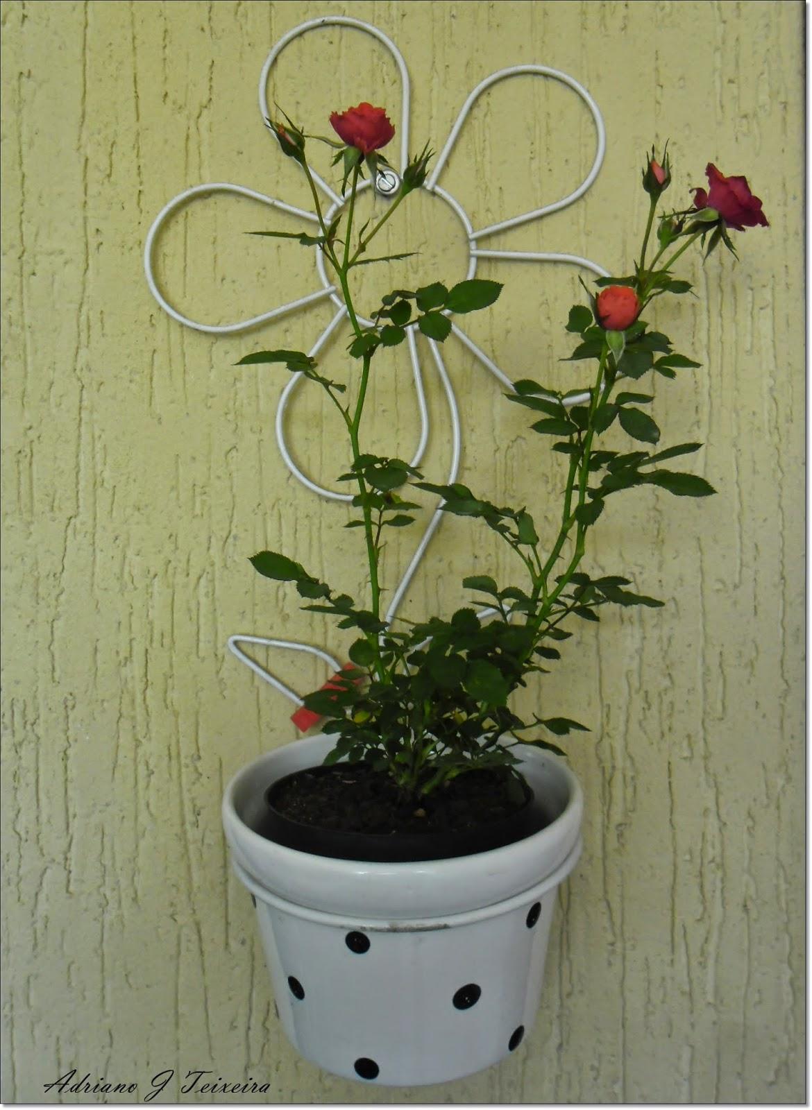 Mundo das plantas mini rosa pequenas plantas for Pianta rosa