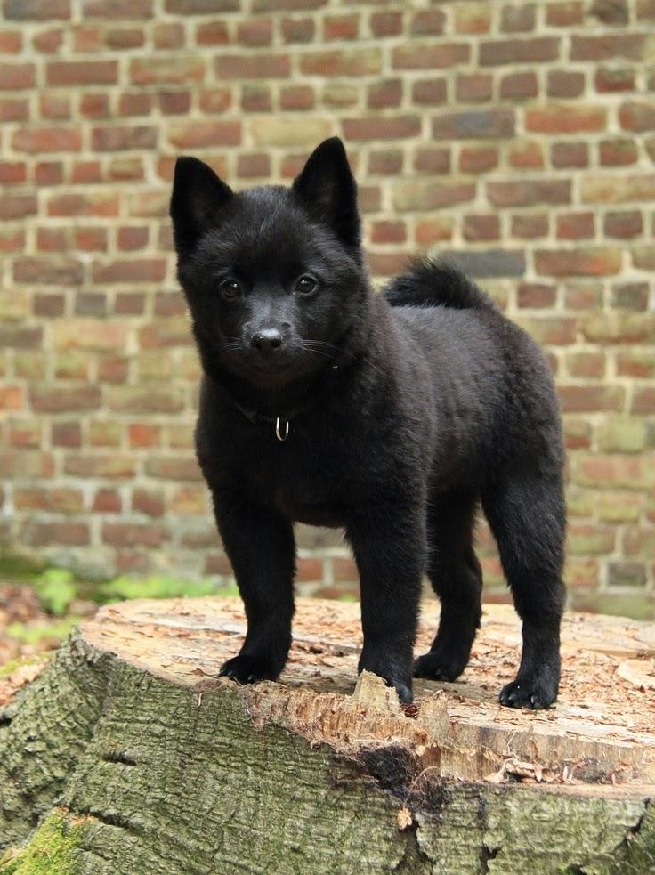 5 Unique Dog Breeds you never come across