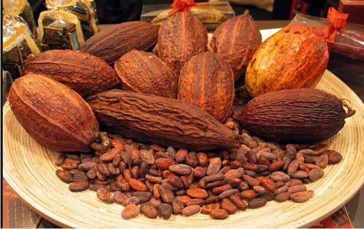 How To Start Cocoa Export Business In Nigeria and Make Profit