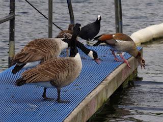 Kensington Gardens And Hyde Park Birds