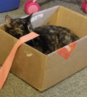 cat in science project box 1