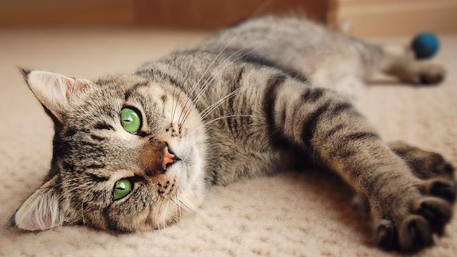 Meu gato herói - Histórias da Lucieni #5