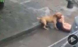 Hombre Atacado por Pitbull Loco
