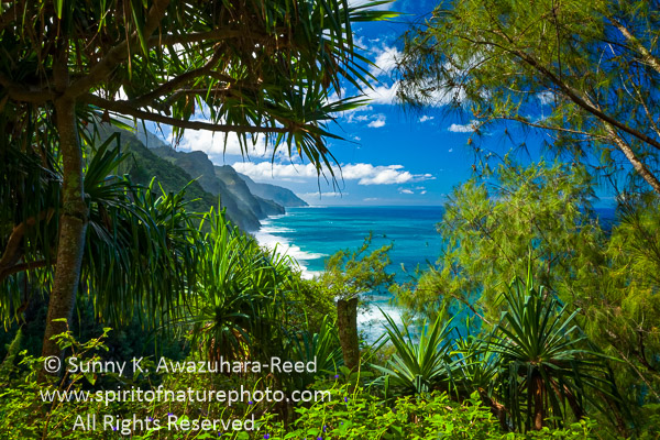 Kauai Weather – How It Will Affect Your Vacation | Kauai ...
