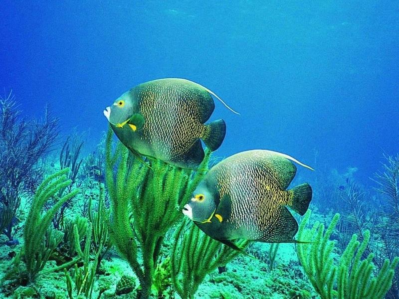 aquatic biomes pitchers bing images