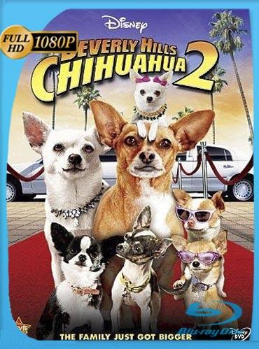 Beverly Hills Chihuahua 2 (2011)HD [1080p] Latino [GoogleDrive] RuizHD
