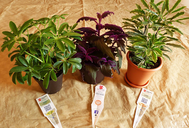 Container friendly houseplants
