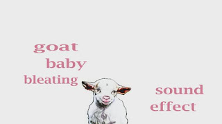 learn goat sounds