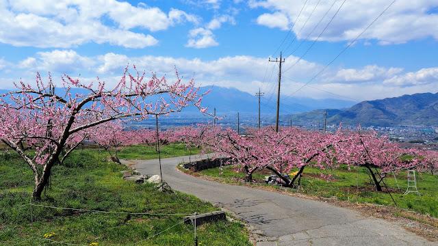 塩山から笛吹、山梨市と甲府盆地の桃の花畑を巡る。東京で桜が終わった後に楽しめる春のおすすめサイクリングコース。