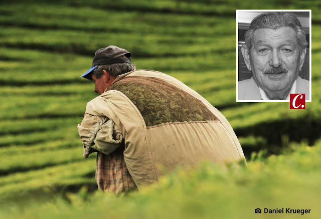 ambiente de leitura carlos romero gonzaga rodrigues homem do campo maquina tecnologia agricola ausencia trabalhador rural desmatamento campo de agave prejuizo monocultura capitalista