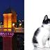 İzmir Veteriner Klinik Listesi