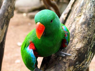 parrot hd picks