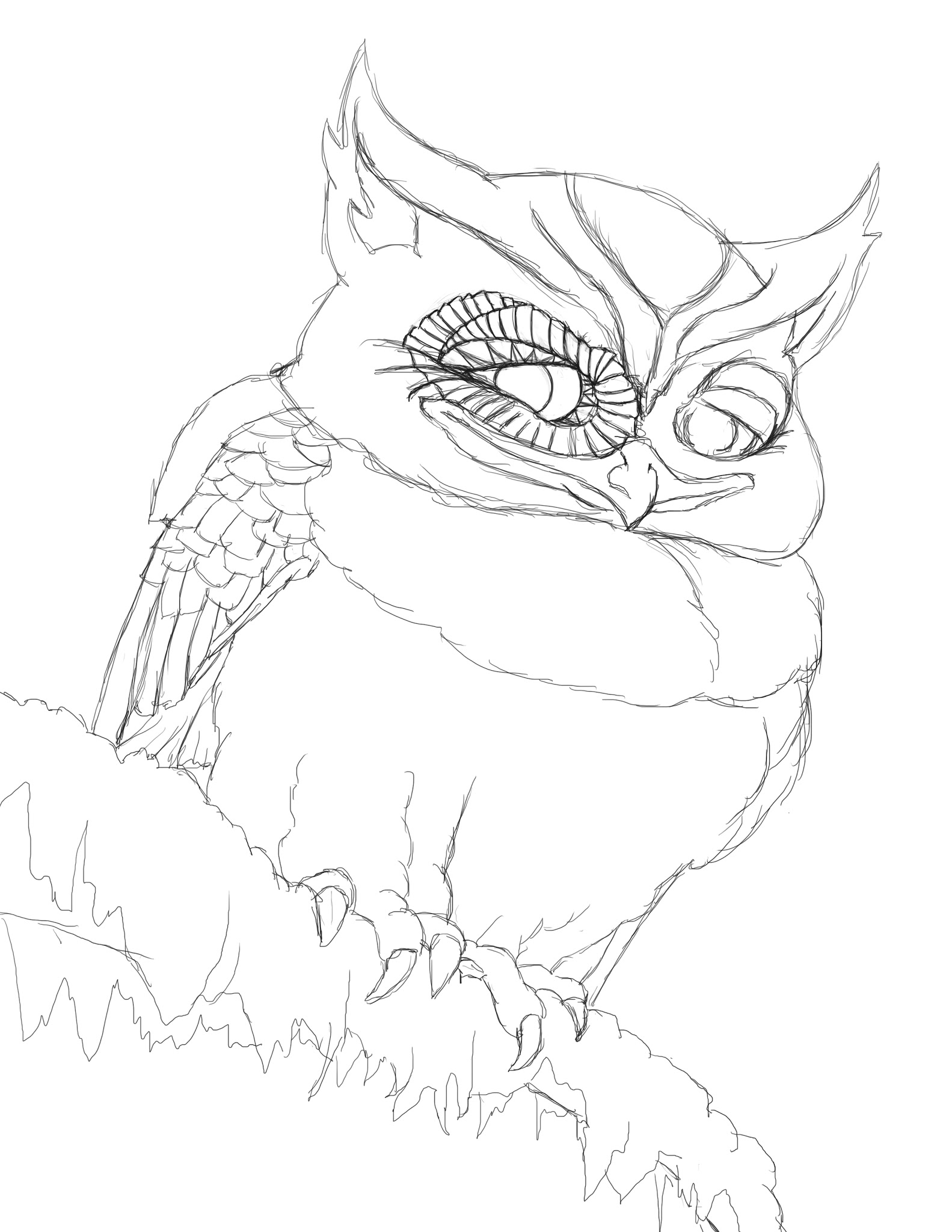 Coloring pages 365 - Coloring Page Coy Little Owl