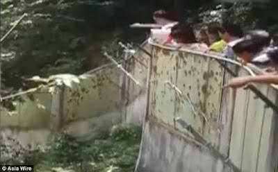 pengunjung lwmpari panda dengan batu sambil tertawa