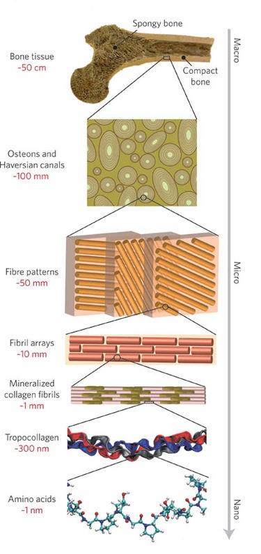 La datazione al radiocarbonio è comunemente usata fino ad oggi