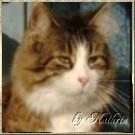 https://the-river-cats.blogspot.de/p/brummbarchen-muckele.html