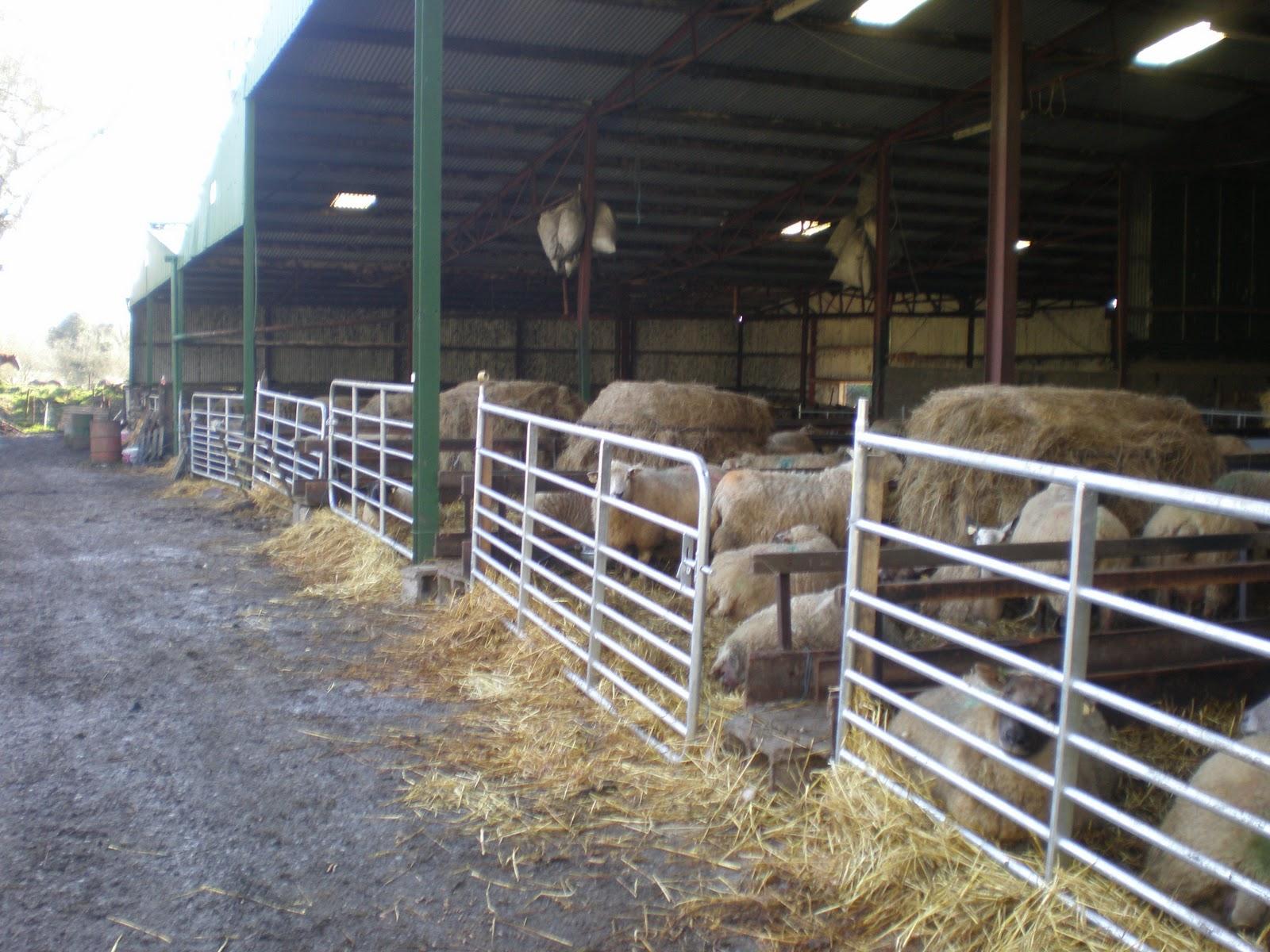 Sheep Shed Design In Ireland Artikel Online