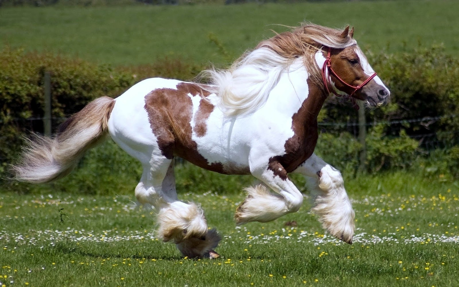 Fast Running White Brown Horse