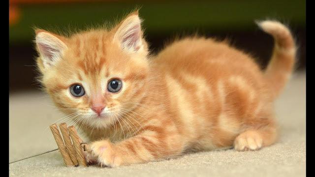 Gejala Kucing Keracunan Yang Harus Diketahui Setiap Pemilik