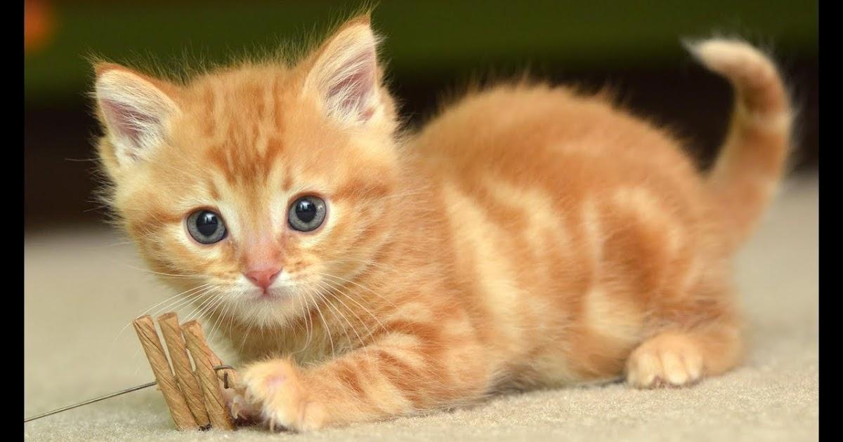 Gejala Kucing Keracunan Yang Harus Diketahui Setiap Pemilik Aprie