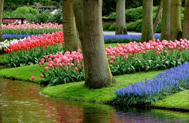 Цветущие ленты из первоцветов