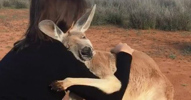Adorable Kangaroo Hugs The Volunteers Who Rescued Her