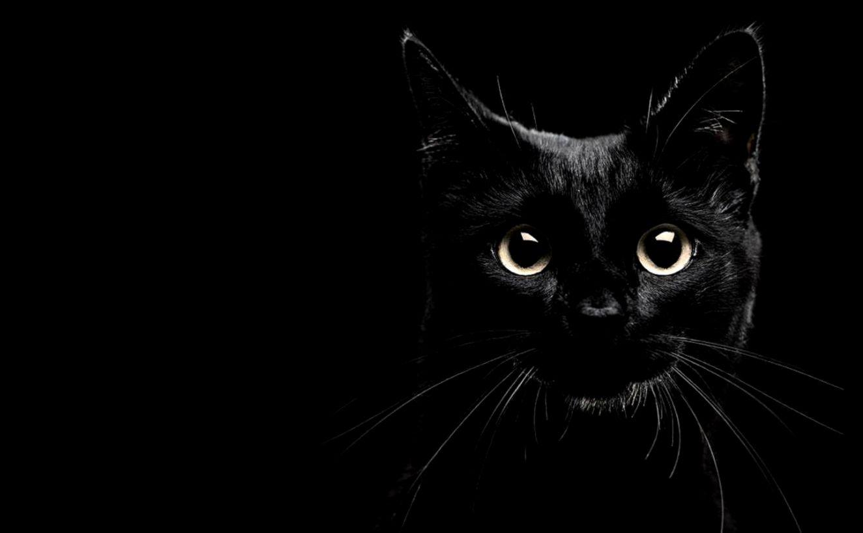 Cats Photo Hd Wallpaper Wallpapers Legend